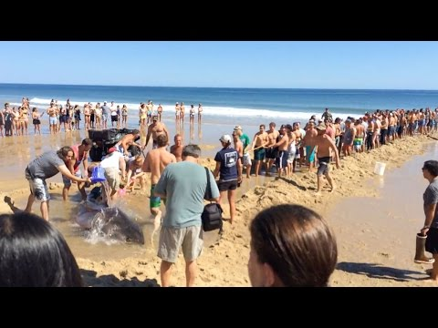 Tourists Attempt To Rescue Great White Shark