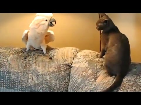 Thumbnail: 17 FUNNY PET VIDEOS 🐶🐐😻 TRY NOT TO LAUGH [Funny Pets]