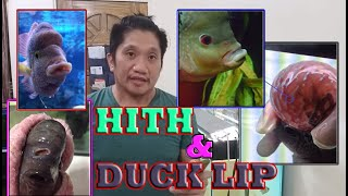 HOW TO: Treatment for Hole In The Head and Duck Lip... Paano Gamutin??? ++ SHOUT-OUTS ++