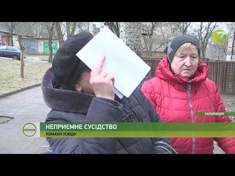 Телеканал Z: Новини Z - Жителі запорізької багатоповерхівки потерпають від ферми комах - 26.02.2020