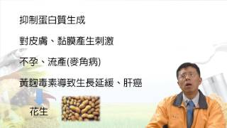 穀物貯存與加工安全認識@3.穀類危害來源