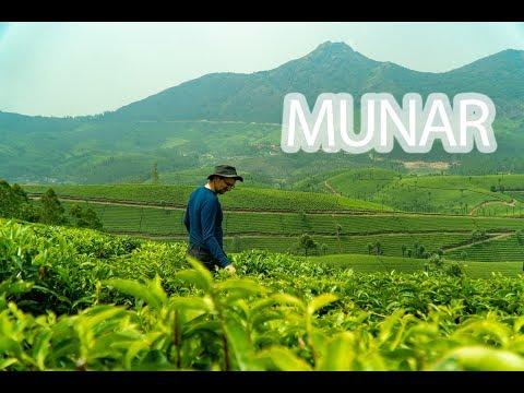 Plantacja herbaty w Indiach w Munar - Kerala Blog Express