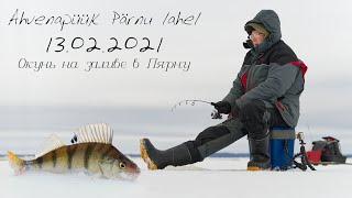 Ahvenapüük Pärnu lahel Ловля окуня на Пярнуском заливе топориком зимняя рыбалка 2021