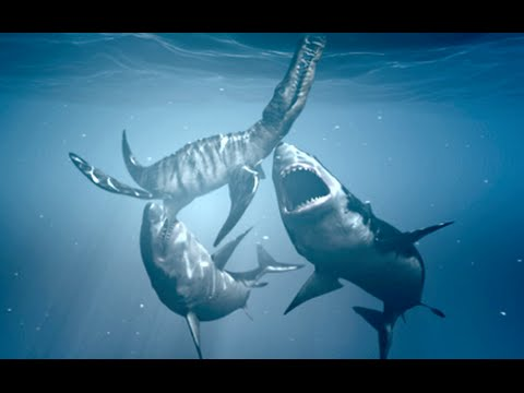 5 Amazing Facts About The Megalodon - YouTube