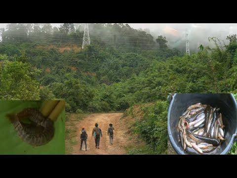 Mus Nuv Leev Toj Siab Los Cub Noj/Hmong Fishing Old Style Only In Laos/ຈັບປາພັ່ນຢູ່ບ້ານນາ