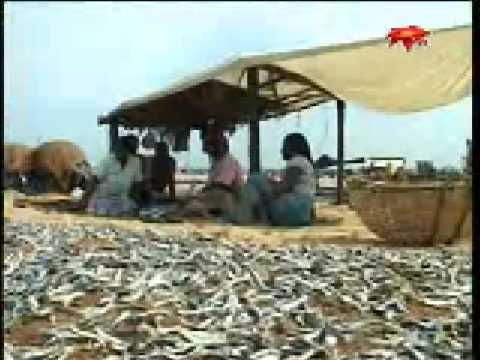 SriLankaToday Episode 01- Negombo fisherman