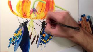 Pastel drawing - Realistic butterflies with flower