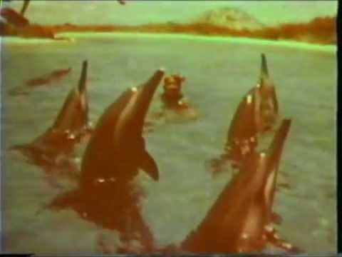Hawaii 1950's thru 1980 Home Movie Footage,Surfing,Kilauea Volcano Footage & Sea Life Park.