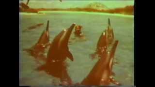 Hawaii 1950