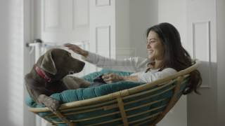 Woman and dog in a Papasan chair, stock footage