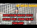 Masteran Murai Batu Gacor Full Isian Cililin Panjang  Mp3 - Mp4 Download