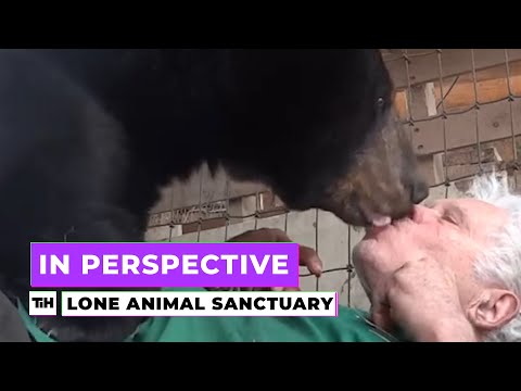 In Perspective: Animal Sanctuary | This is Happening