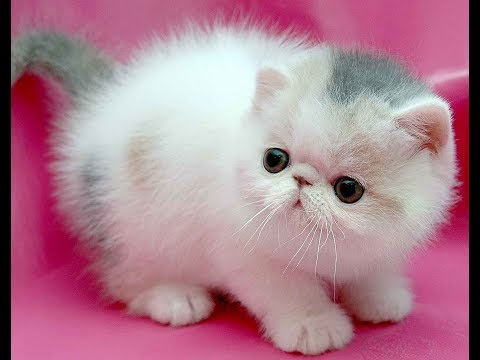 Best Of Cute Kittens Meowing Compilation