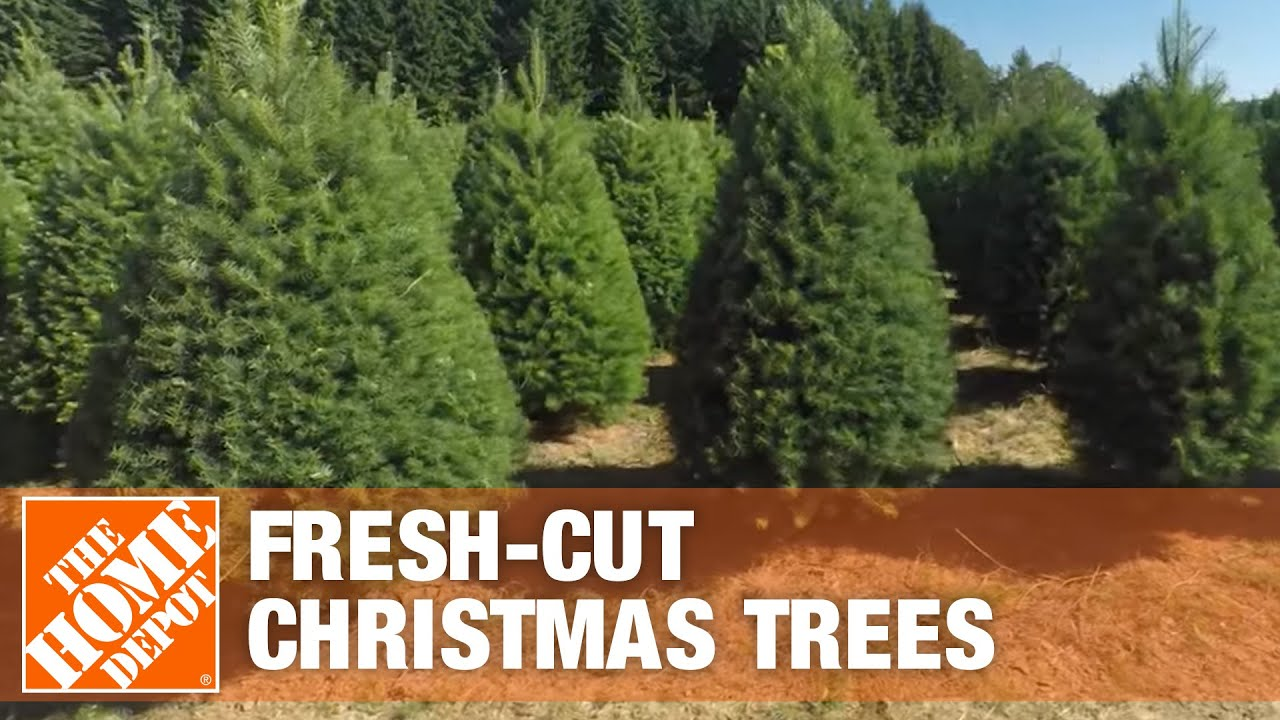 Where Fresh-Cut Christmas Trees Come From – The Home Depot - YouTube