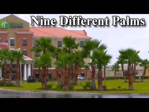 #9 Kinds Palm Trees-ICE-Survival List* +Plant @ NY, TX  &  VA+