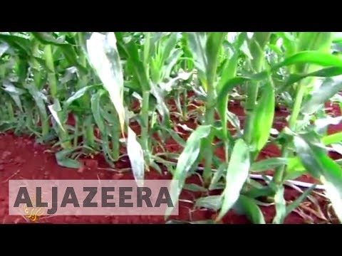 Hawaiians battle use of pesticides in crops