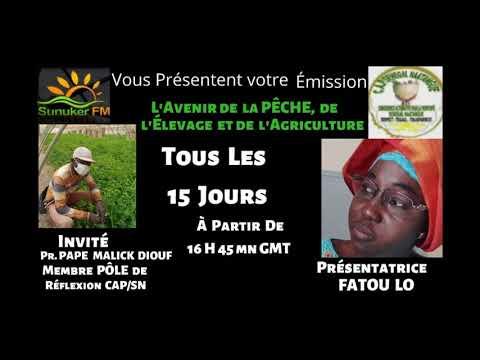 L'avenir de la Peche, de l'Elevage et de l'Agriculture avec Mme Fatou Lo Invite Pr Pape Malick Diouf