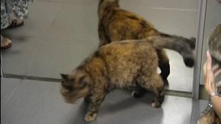 Красноярцы берут котов напрокат, чтобы лечиться и расслабляться