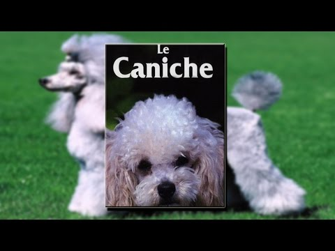 Le Caniche - Film documentaire