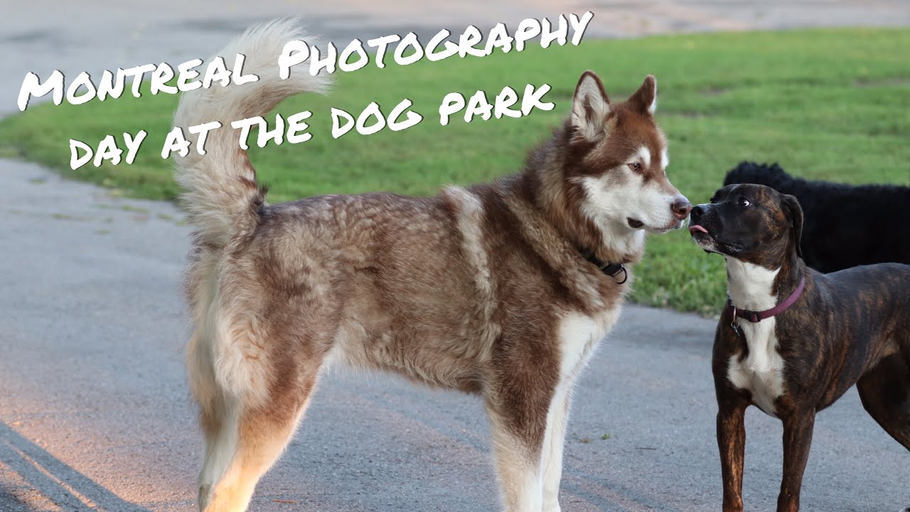 Montreal Photography - Day at the Dog Park