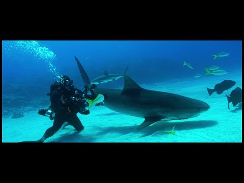Shark Stewards short documentary film