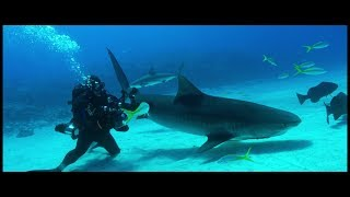 Shark Stewards Short Documentary