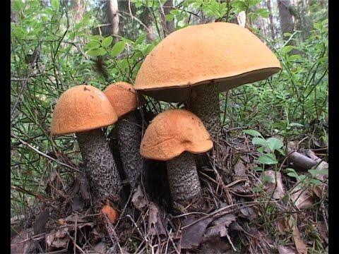 Красивые грибы июля
