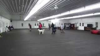 World Class Dog Kennels Beginner Obedience Class Chicago, Il.