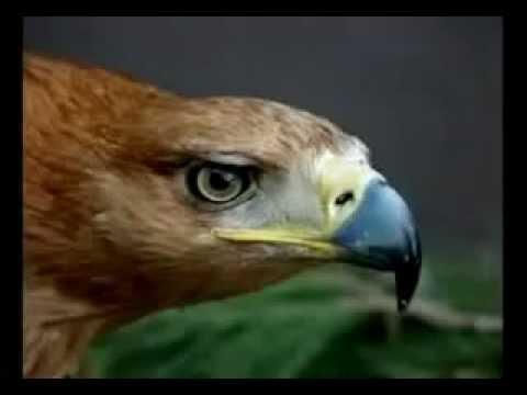 La Superacion Del Aguila Motivacion Y Superacion Personal Youtube