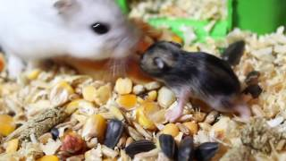 Жизнь домашних животных