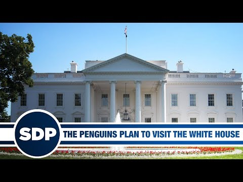 The Penguins are Going to the White House | The Steve Dangle Podcast