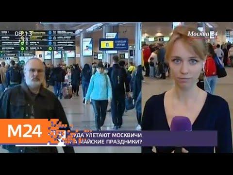 В аэропорт Домодедово привезли собак для снятия стресса - Москва 24