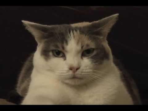 Thumbnail for Cat Video Cat sitting on vibrating phone