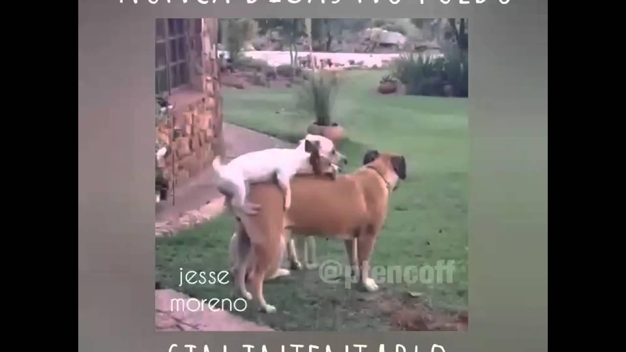 Culiando con animales