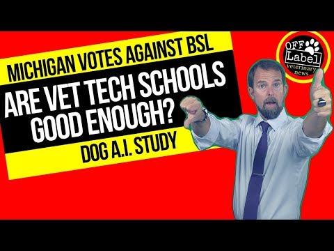 Are Vet Tech Schools Good Enough, Michigan May Ban BSL, Dog A.I. Study