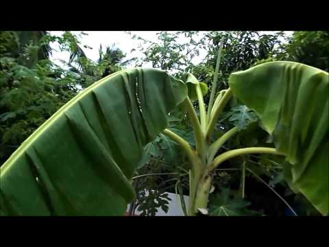 Terrace garden by dr sreelatha sam doovi for Terrace krishi