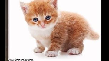 photos de chats trop mignons :3