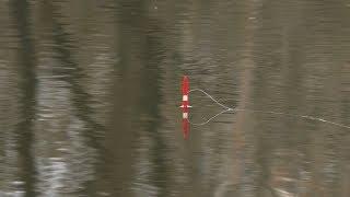 Рыбалка на поплавок на реке в апреле Ловля на маховую удочку весной 2019