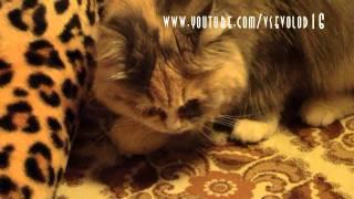 Cat & potato / Кошка и картошка
