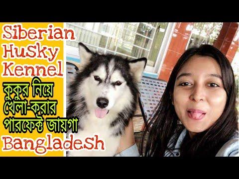 Siberian Husky Bangladesh|| Husky kennel Bangladesh  || Husky in Dhaka