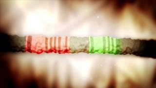 the origins of human color vision hhmi biointeractive video