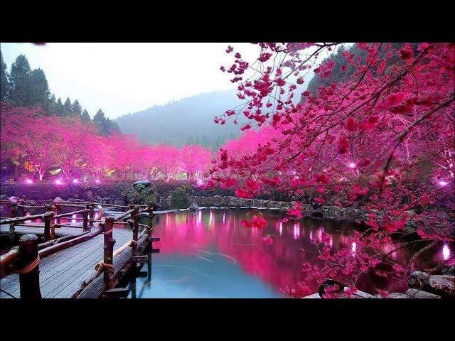 Смотреть видео Японский парк цветов - Шикарная музыка