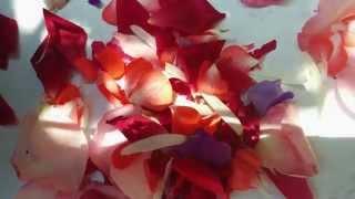Somewhere Over the Rainbow - Live Animals Ft J-Jox ( Remix )