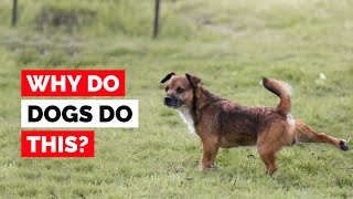 Why Do Dogs Kick Their Feet After Pooping?