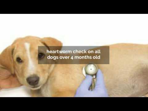 union county animal shelter