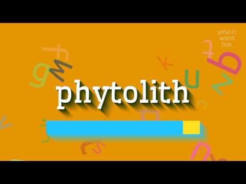 "How to say ""phytolith""! (High Quality Voices)"
