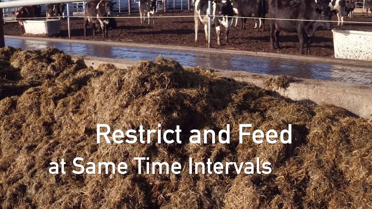 Calf Rearing - Teagasc   Agriculture and Food Development