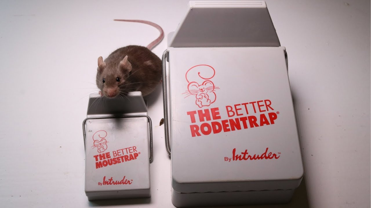 the-better-mousetrap-rodent-trap-made-by-intruder-major-rat-fail