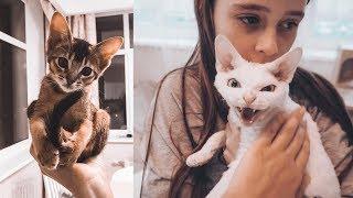 НАШ НОВЫЙ ПИТОМЕЦ | Как назвали? | Реакция второй кошки