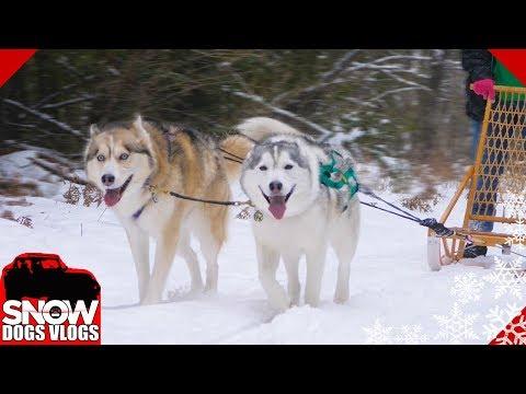 dog sledding video - 480×360